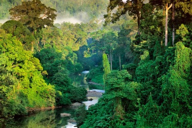 Borneo-forests-Danum-river